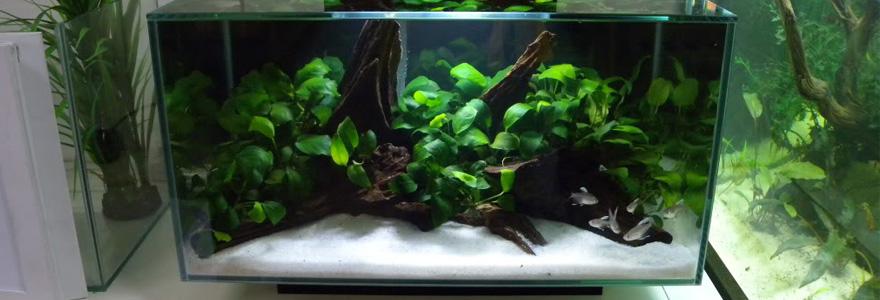 Aquarium nano fluvial
