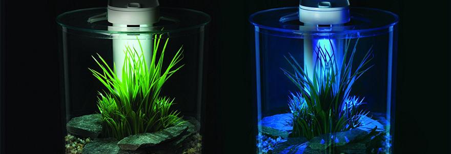 aquariums design