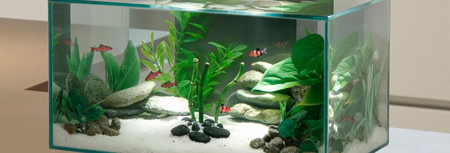 accessoires pour aquarium