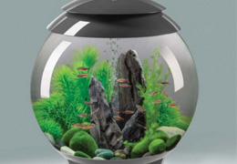 astuces pour l achat d une table aquarium pas cher. Black Bedroom Furniture Sets. Home Design Ideas